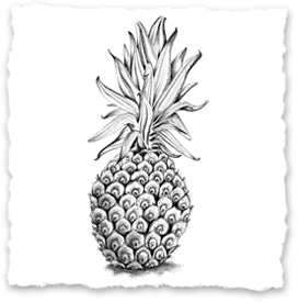 Ananas. Little Papershop - Illustrationer, posters, prints. Amanda Barksell.