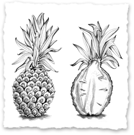 Ananas 2. Little Papershop - Illustrationer, posters, prints. Amanda Barksell.